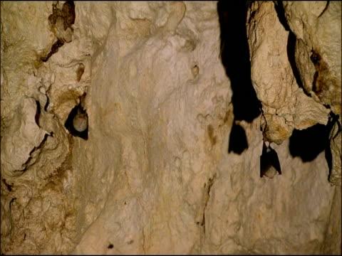 bats in cave, parque natural sierras subbeticas (cordoba), andalucia, spain - gespreizte flügel stock-videos und b-roll-filmmaterial