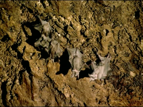 bats on cave ceiling, andalucia, spain - medium group of objects stock videos & royalty-free footage