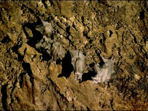 vidéos et rushes de bats on cave ceiling, andalucia, spain - groupe moyen d'objets