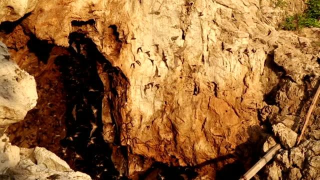 battambang bats - cave stock videos & royalty-free footage