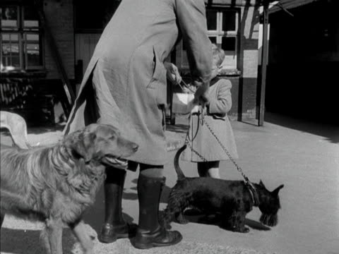 a battersea dogs' home worker hands over a scotty dog to a small boy 1950 - バタシー点の映像素材/bロール
