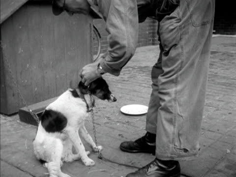 battersea dogs' home worker places a stray dog with other dogs in the back of his van. 1950. - other stock videos & royalty-free footage