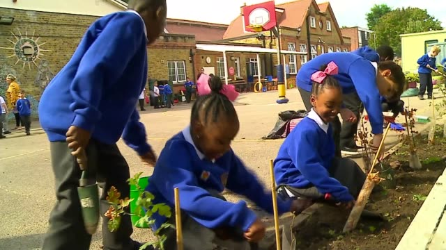 battersea school's wildlife garden is insect haven uk battersea schoolchildren gardening in christ church primary school wildlife garden plants bees... - child stock videos & royalty-free footage