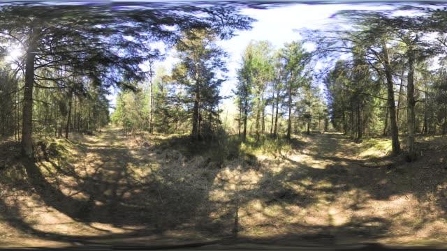 360VR: Bavarian forest in spring