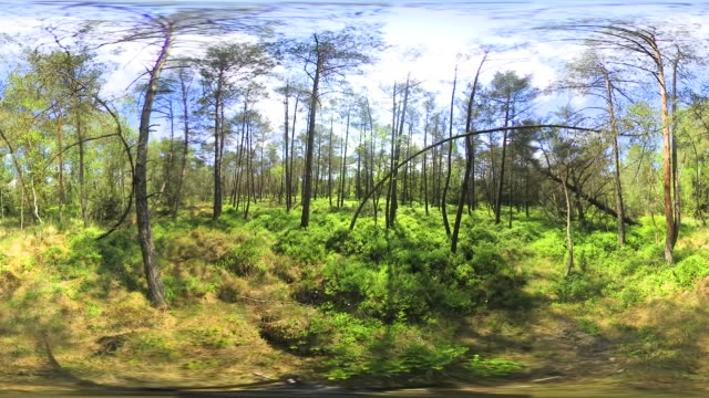 360VR: Bavarian forest in spring