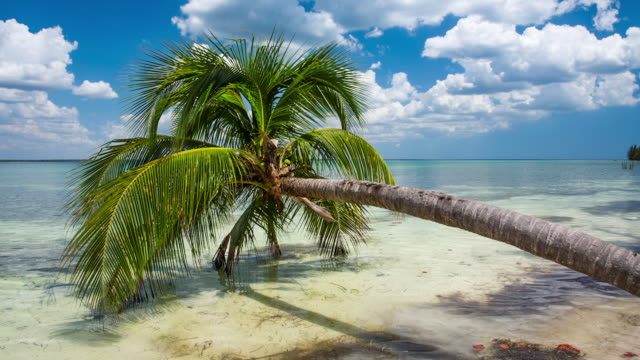 bay of pigs beach in cuba - tropical tree stock videos & royalty-free footage