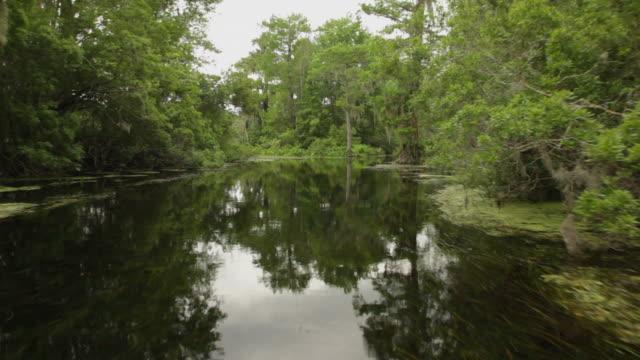 vidéos et rushes de bayou rivière - marécage