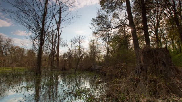bayou sunset time lapse full 4k - wide shot stock videos & royalty-free footage