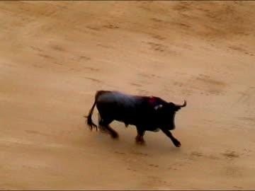 stockvideo's en b-roll-footage met ole toro! - stier mannetjesdier