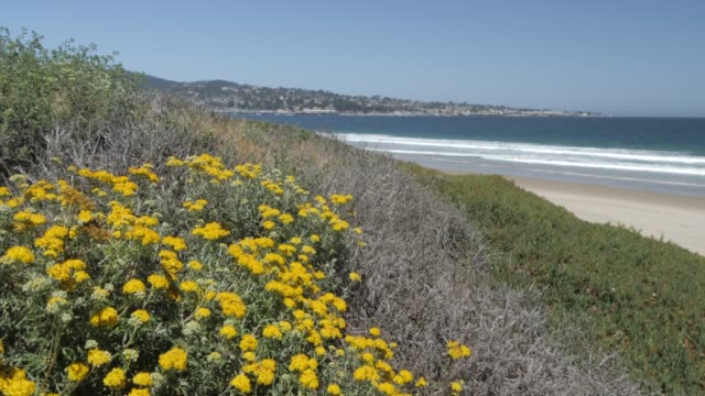 beach and pacific ocean, monterey peninsula, california, united states of america, north america - north pacific ocean stock videos & royalty-free footage