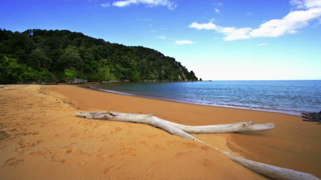 Beach  at Abel Tasman NZ