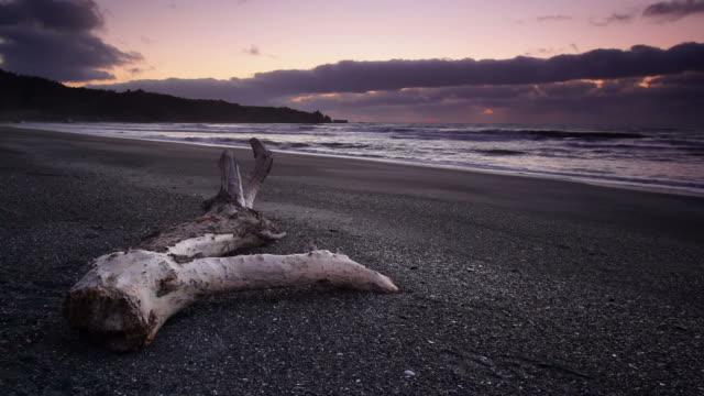 stockvideo's en b-roll-footage met beach at dawn - drijfhout