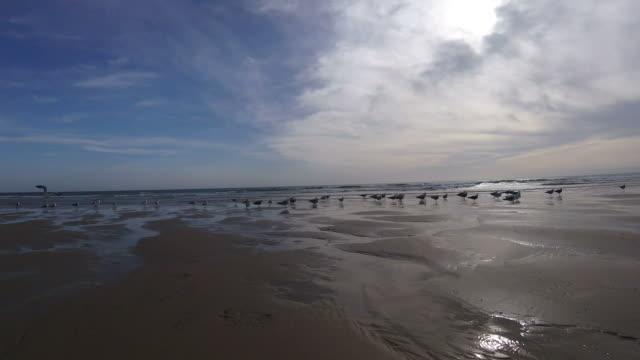 vídeos de stock, filmes e b-roll de praia na maré baixa - vazante