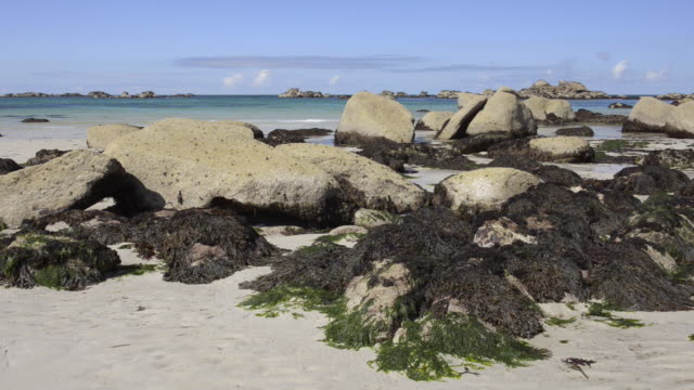 beach at low tide with seaweed on rocks - seetang stock-videos und b-roll-filmmaterial