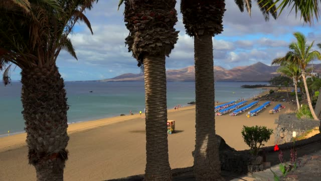 vidéos et rushes de beach at puerto del carmen, lanzarote, canary islands, spain, atlantic, europe - palmier