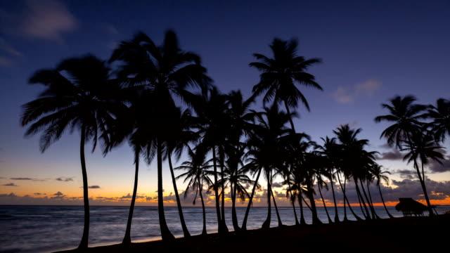 vídeos y material grabado en eventos de stock de beach at sunrise - hispaniola