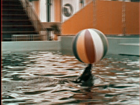 beach ball landing in pool at new york world's fair/ sea lion catching ball, balancing it on its nose, swimming, and jumping onto deck during water... - unknown gender stock videos & royalty-free footage