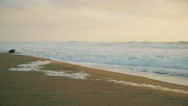 beach by the pacific ocean. - north pacific ocean stock videos & royalty-free footage