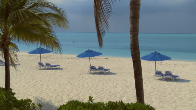 ws, ha, beach chairs under sun umbrellas facing ocean, palm trees in foreground, abaco islands, bahamas - fan palm tree stock videos & royalty-free footage