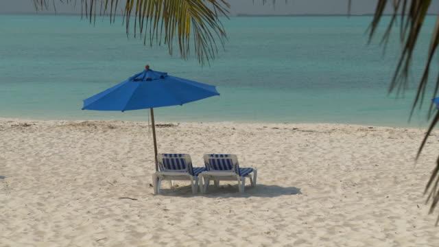 vídeos y material grabado en eventos de stock de zo, ws, ha, beach chairs under sun umbrellas facing ocean, palm trees in foreground, abaco islands, bahamas - palmera abanico
