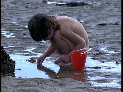 beach clean up campaign; itn wales: gower peninsula: ext children playing on beach and on mudflats looking for crabs / port talbot cooling towers... - kelp stock videos & royalty-free footage