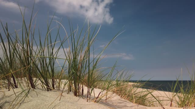 beach dunes on the island of sylt - dünengras in list auf sylt - tina terras michael walter 個影片檔及 b 捲影像