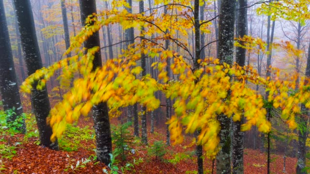 beach forest in autumn - laubbaum stock-videos und b-roll-filmmaterial