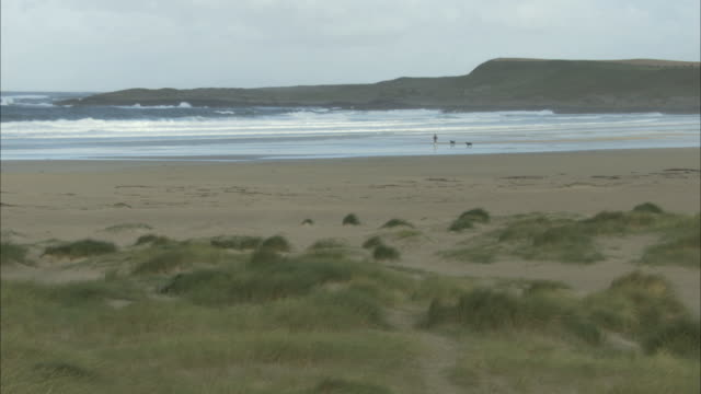 ws beach in hebrides with man walking dogs - hebrides stock videos & royalty-free footage