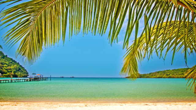 Beach in palm tree
