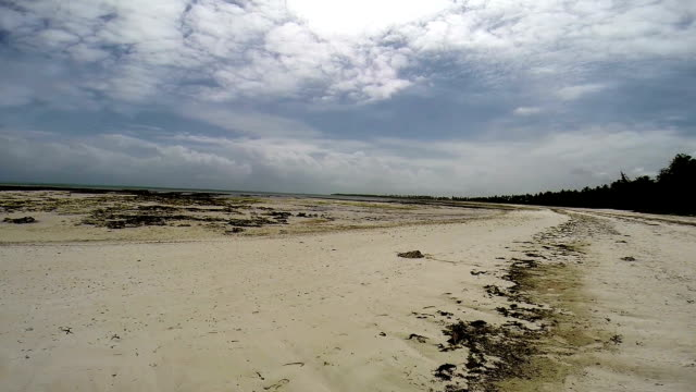 Beach in Zanzibar at low tide