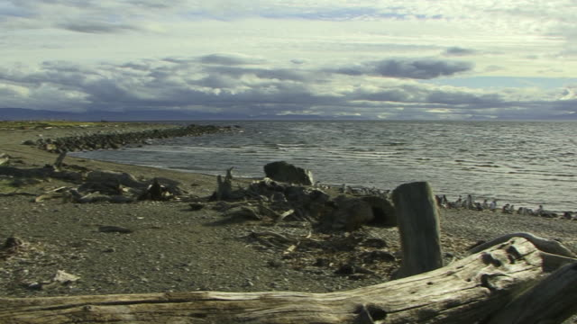 WS PAN Beach landscape, Magellan Penguins (Spheniscus magellanicus) in background / Punta Arenas, Magallanes, Chile