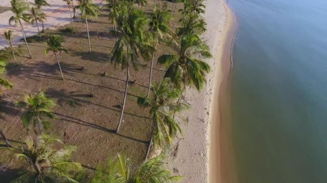 beach on phu quoc island, vietnam - coconut palm tree stock videos & royalty-free footage