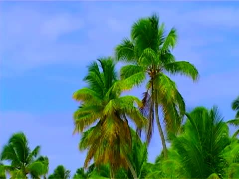 stockvideo's en b-roll-footage met beach, palm tree, the blue sky, tropical paradise. haiti island - haïti