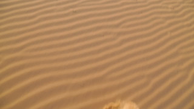 vidéos et rushes de beach sand ripples, qld island beach, australia - extreme close up