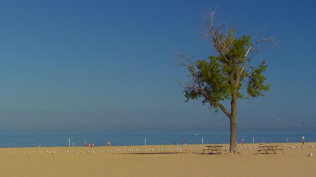 vidéos et rushes de beach scene - table de pique nique
