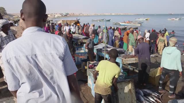 beach scenes include fisherman carrying two hands of fish from boat to market, two fishermen bring fish from boats to waterside, somali man cutting... - fisherman stock videos & royalty-free footage