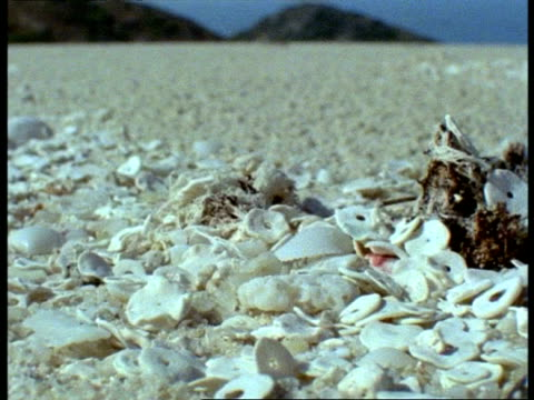 beach & seashells, cu pan right, great barrier reef - seashell stock videos and b-roll footage