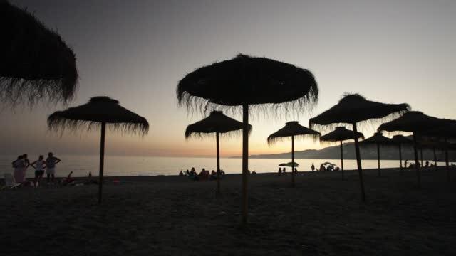 vidéos et rushes de beach silhouettes at sunset - arbre tropical