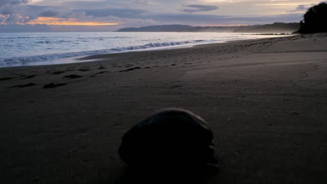 beach sunrise, montezuma, puntarenas province, costa rica: coconut concept - puntarenas province stock videos & royalty-free footage