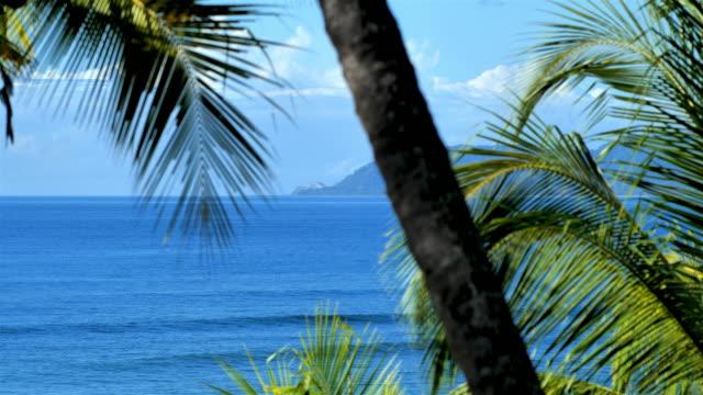 beach sunrise, montezuma, puntarenas province, costa rica - puntarenas province stock videos & royalty-free footage