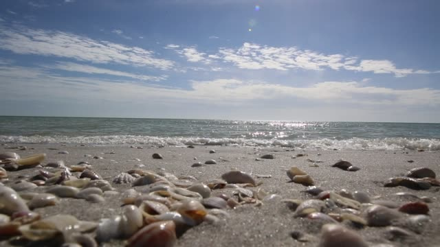 beach vacation destination sanibel island video - animal shell stock videos & royalty-free footage