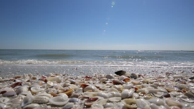 strand urlaub destination sanibel island video - gulf coast states stock-videos und b-roll-filmmaterial