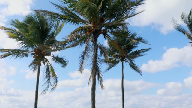 beach - varadero beach stock videos and b-roll footage