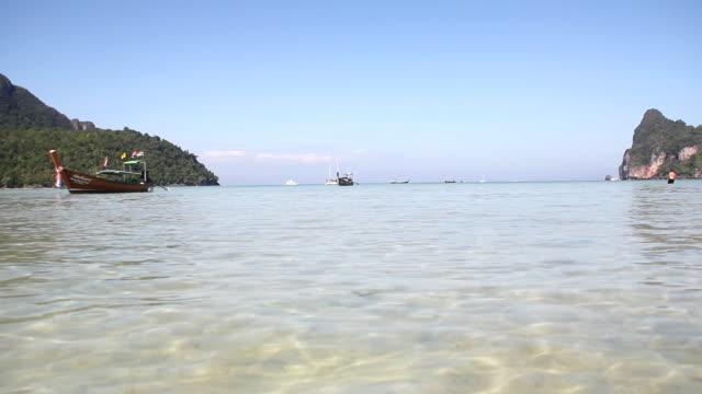 vídeos de stock e filmes b-roll de praia ((hd - árvore tropical