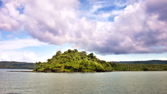 vídeos y material grabado en eventos de stock de la playa - árbol tropical