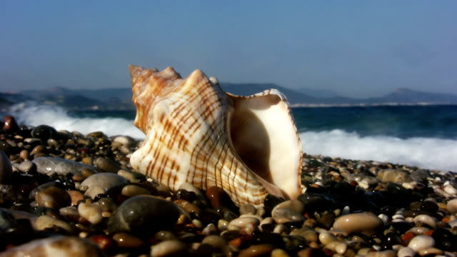 beach (hd) - seashell stock videos and b-roll footage