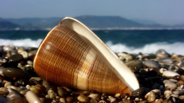 vidéos et rushes de plage (hd - rivage