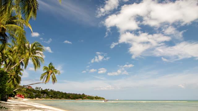 vidéos et rushes de la plage - arbre tropical
