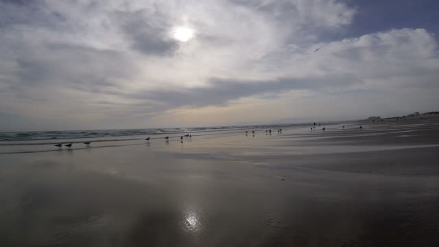 beach - low tide stock videos & royalty-free footage