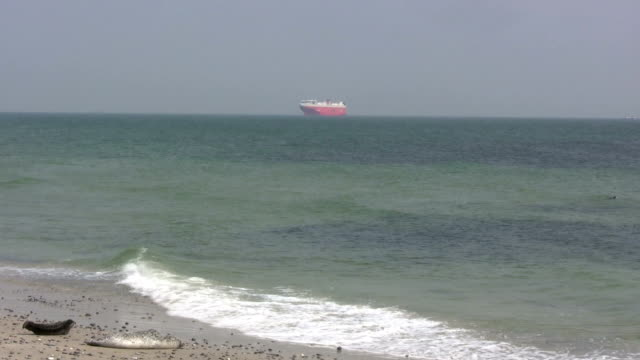 beach waves, two seals and a huge red ship - helgoland stock videos & royalty-free footage